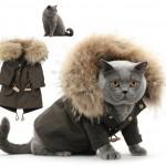 Kedi Modası