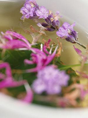 gripten-koruyan-bitki 3