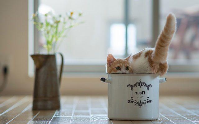 sepetteki-kedi