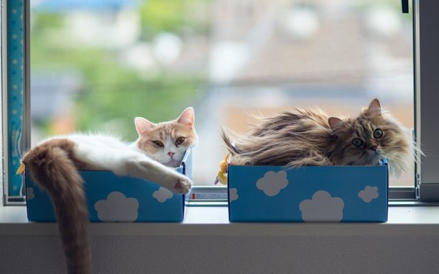 iki-tatli-kedi