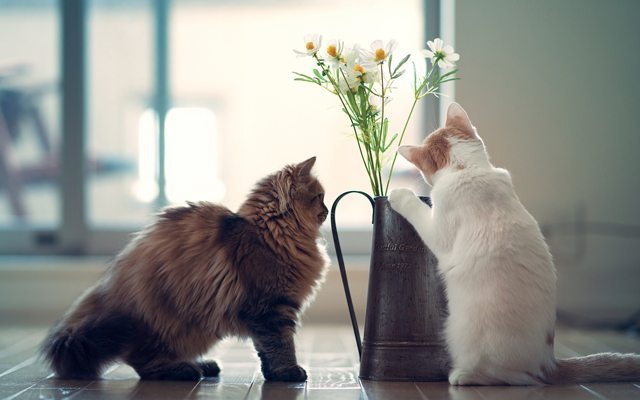 keyifli-kedilr