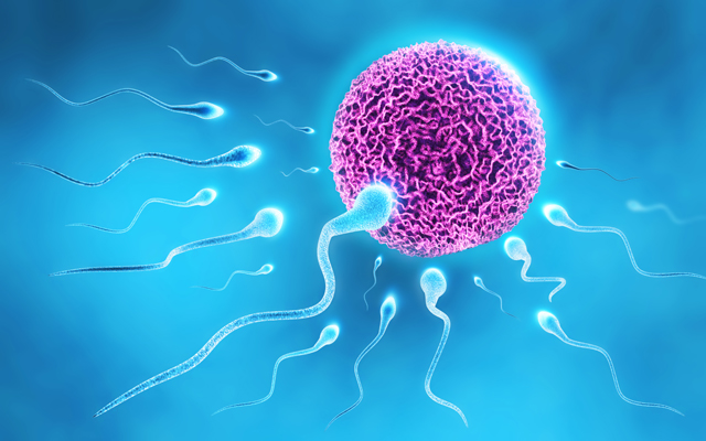 spermin-faydalari